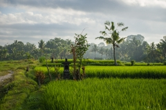Reisfeldwanderung | Bali