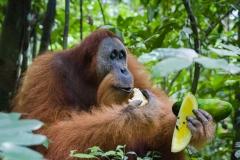 Heimlicher Geniesser | Sumatra