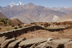 Muktinath | Mustang