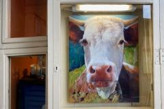 Kuh-im-Schaufenster